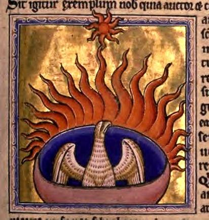 Peacock : Hostorical Phoenix Illustration